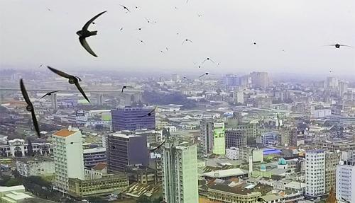 アフリカのドローン|鳥