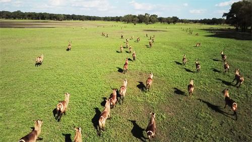 アフリカのドローン|野生動物