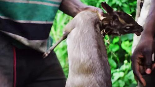 アフリカの野生動物ハンター|ナイジェリア