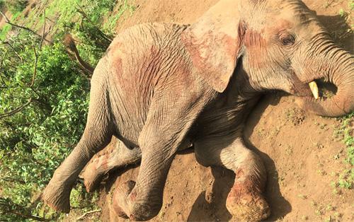 ゾウの孤児院|ケニア